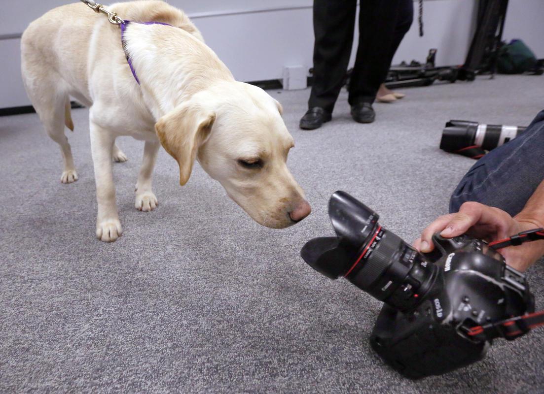 تصوير الحيوانات الأليفة كالمحترفين ... نصائح احترافية لتصوير حيوانك الأليف